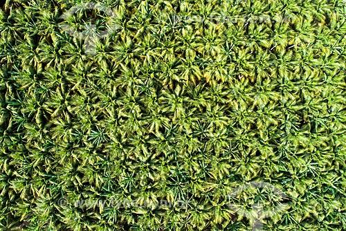 Foto feita com drone de plantação de côco na caatinga usando irrigação do Açude São Gonçalo  - Sousa - Paraíba (PB) - Brasil