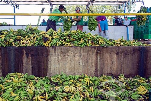 Processo de lavagem em plantação de banana  - Barbalha - Ceará (CE) - Brasil