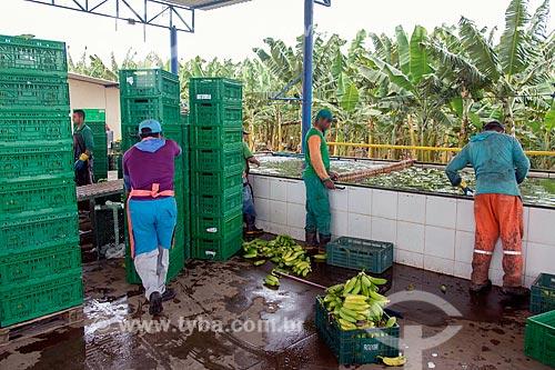 Detalhe do processo de lavagem em plantação de banana  - Barbalha - Ceará (CE) - Brasil