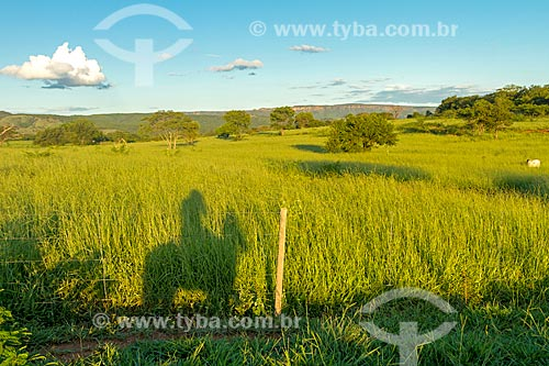 Sombra de peão à cavalo em fazenda  - Montes Claros - Minas Gerais (MG) - Brasil