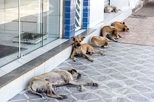 Cães sem raça definida deitados à sombra  - Sousa - Paraíba (PB) - Brasil