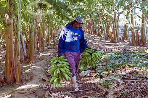 Trabalhador rural da Tribo Truká colhendo bananas  - Cabrobó - Pernambuco (PE) - Brasil