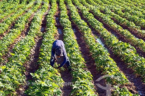 Trabalhador rural em plantação de mandioca na aldeia da Tribo Truká  - Cabrobó - Pernambuco (PE) - Brasil