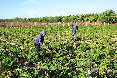 Trabalhadores rurais em plantação de mandioca na aldeia da Tribo Truká  - Cabrobó - Pernambuco (PE) - Brasil