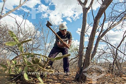 Homem da aldeia da Tribo Pipipãs cortando madeira para construir cerca  - Floresta - Pernambuco (PE) - Brasil