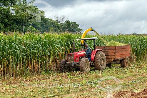 Colheita mecanizada de milho transgênico - para silagem e alimentação de gado - na zona rural da cidade de Guarani  - Guarani - Minas Gerais (MG) - Brasil