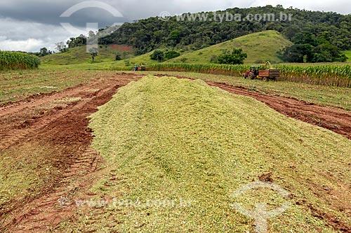 Milho transgênico triturado - para silagem e alimentação de gado - na zona rural da cidade de Guarani  - Guarani - Minas Gerais (MG) - Brasil