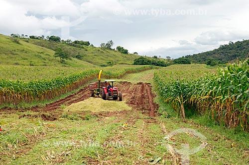 Descarregamento de milho transgênico triturado - para silagem e alimentação de gado - na zona rural da cidade de Guarani  - Guarani - Minas Gerais (MG) - Brasil