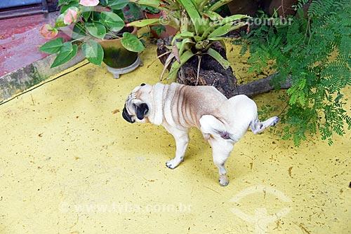 Cachorro em varanda de casa na Ilha de Paquetá  - Rio de Janeiro - Rio de Janeiro (RJ) - Brasil