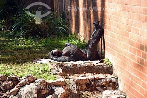 Jaula de chimpanzé-comum (Pan troglodytes) no Jardim Zoológico do Rio de Janeiro  - Rio de Janeiro - Rio de Janeiro (RJ) - Brasil
