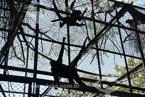 Jaula de macaco-aranha no Jardim Zoológico do Rio de Janeiro  - Rio de Janeiro - Rio de Janeiro (RJ) - Brasil