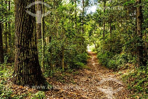 Trilha do Caminho da Gurita no Parque Municipal da Lagoa do Peri  - Florianópolis - Santa Catarina (SC) - Brasil