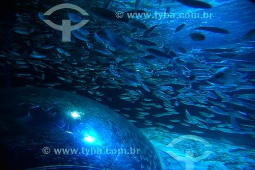 Cardume no AquaRio - aquário marinho da cidade do Rio de Janeiro  - Rio de Janeiro - Rio de Janeiro (RJ) - Brasil