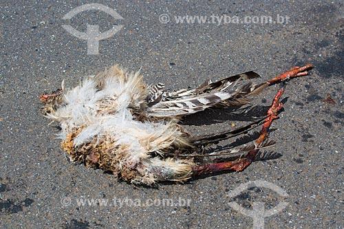 Seriema (Cariama cristata) morta no acostamento da Rodovia GO-164 próximo à cidade de Mossâmedes  - Mossâmedes - Goiás (GO) - Brasil