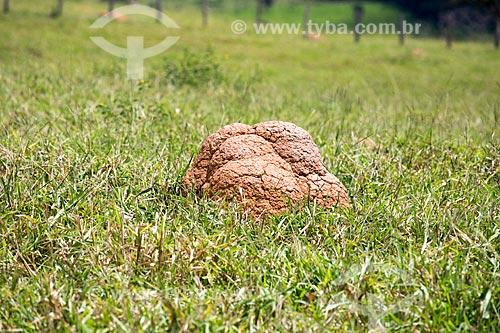 Cupinzeiro no cerrado próximo à cidade de Mossâmedes  - Mossâmedes - Goiás (GO) - Brasil