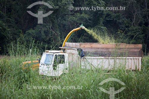 Colheita mecanizada de milho no Km 121 da Rodovia BR-060 próximo à Anápolis  - Anápolis - Goiás (GO) - Brasil