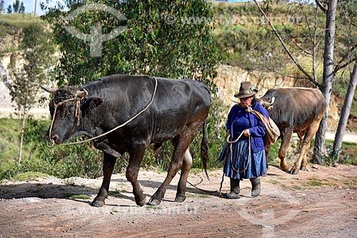 Mulher andina conduzindo o gado na zona rural da cidade de Chinchero  - Chinchero - Província de Urubamba - Peru