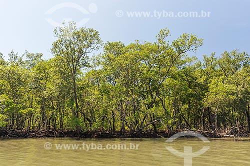 Vista do manguezal do Rio Grande no Saco do Mamanguá  - Paraty - Rio de Janeiro (RJ) - Brasil