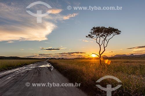 Vista de vegetação típica do cerrado na Chapada dos Veadeiros durante o pôr do sol  - Alto Paraíso de Goiás - Goiás (GO) - Brasil
