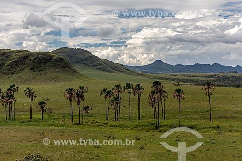 Vista de buritis (Mauritia flexuosa) no Jardim de Maytrea  - Alto Paraíso de Goiás - Goiás (GO) - Brasil