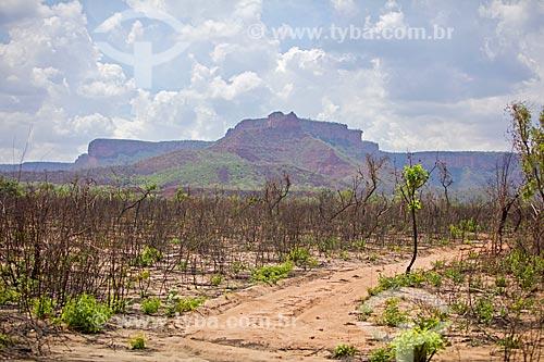 Vista da Serra das Mangabeiras durante a trilha no Parque Nacional das Nascentes do Rio Parnaíba  - Barreiras do Piauí - Piauí (PI) - Brasil