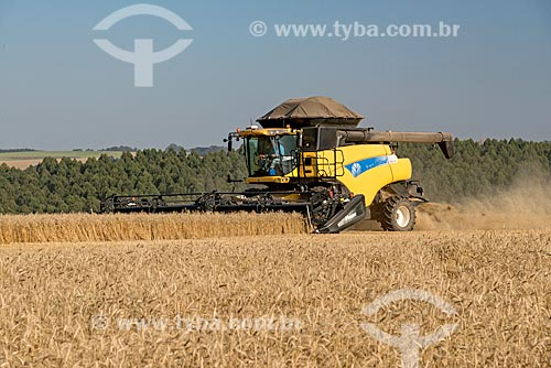 Colheita mecanizada de trigo  - Arapoti - Paraná (PR) - Brasil