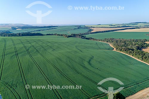 Foto aérea de plantação de trigo  - Arapoti - Paraná (PR) - Brasil
