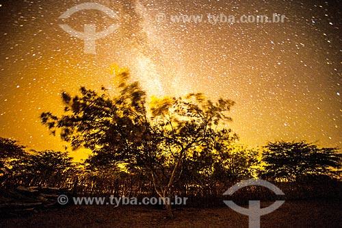 Árvore típica do cerrado na Chapada Diamantina à noite  - Jacobina - Bahia (BA) - Brasil