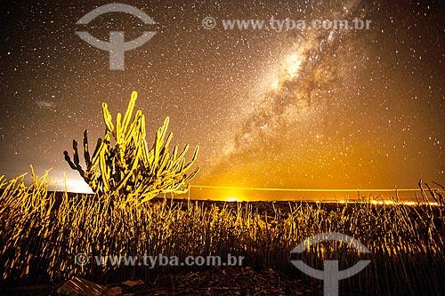 Vegetação típica do cerrado na Chapada Diamantina à noite  - Jacobina - Bahia (BA) - Brasil
