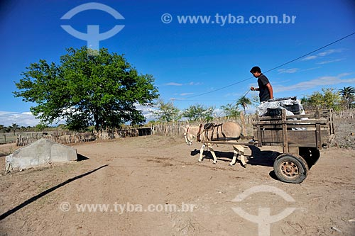 Homem em carroça  - Jacobina - Bahia (BA) - Brasil