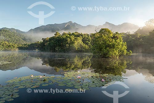 Vista geral de lago com vitória-régia (Victoria amazonica) na Reserva Ecológica de Guapiaçu  - Cachoeiras de Macacu - Rio de Janeiro (RJ) - Brasil