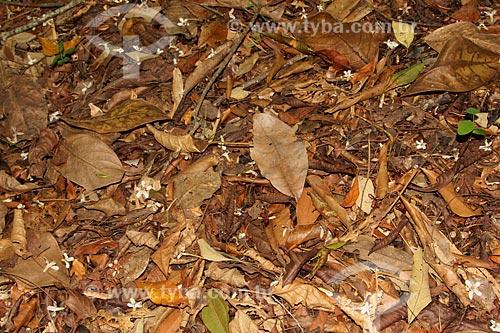Chão coberto por folhas secas no Parque Nacional da Tijuca  - Rio de Janeiro - Rio de Janeiro (RJ) - Brasil