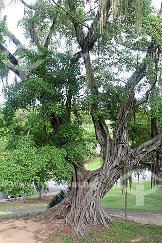 Detalhe de árvore no Parque da Quinta da Boa Vista  - Rio de Janeiro - Rio de Janeiro (RJ) - Brasil