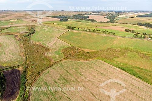 Foto aérea de plantação na Colônia Witmarsum  - Palmeira - Paraná (PR) - Brasil