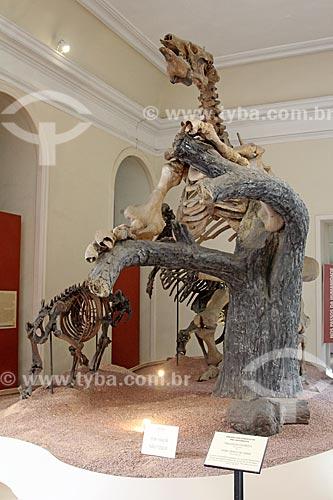 Esqueleto de bicho-preguiça gigante e tigre dente de sabre em exibição no Museu Nacional - antigo Paço de São Cristóvão  - Rio de Janeiro - Rio de Janeiro (RJ) - Brasil