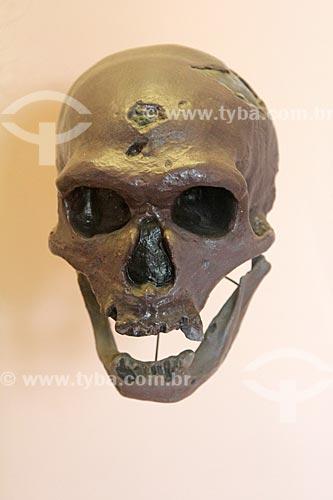 Réplica de crânio de Homem de Neandertal (Homo neanderthalensis) em exibição no Museu Nacional - antigo Paço de São Cristóvão  - Rio de Janeiro - Rio de Janeiro (RJ) - Brasil
