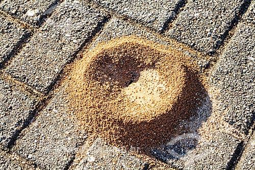 Detalhe de formigueiro em calçada  - Florianópolis - Santa Catarina (SC) - Brasil