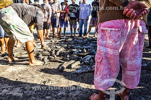 Detalhe de tainhas na Praia do Pântano do Sul  - Florianópolis - Santa Catarina (SC) - Brasil