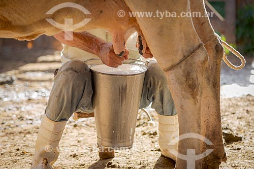 Detalhe de trabalhador rural ordenhando vaca na zona rural da cidade de Guarani  - Guarani - Minas Gerais (MG) - Brasil