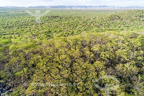 Foto feita com drone de vegetação típica da caatinga depois de pequena chuva  - Custódia - Pernambuco (PE) - Brasil