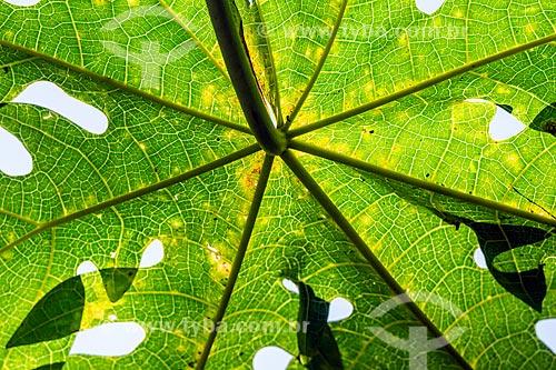 Detalhe de folha no viveiro da Reserva Ecológica de Guapiaçu  - Cachoeiras de Macacu - Rio de Janeiro (RJ) - Brasil