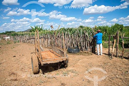 Trabalhador rural chegando em plantação de milho irrigada com água captada do Rio São Francisco  - Custódia - Pernambuco (PE) - Brasil