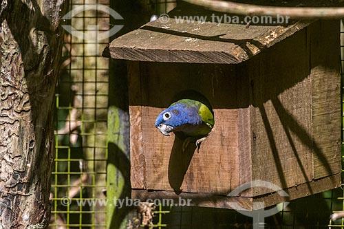 Detalhe de maitaca-de-cabeça-azul (Pionus menstruus) no Parque das Aves  - Foz do Iguaçu - Paraná (PR) - Brasil