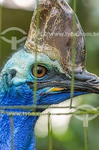 Detalhe de casuar-do-sul (Casuarius casuarius) no Parque das Aves  - Foz do Iguaçu - Paraná (PR) - Brasil