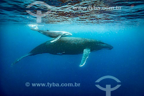 Baleias Jubarte  - Distrito de Vavau - Reino de Tonga