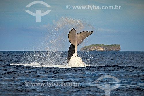 Cauda de Baleia Jubarte  - Distrito de Vavau - Reino de Tonga