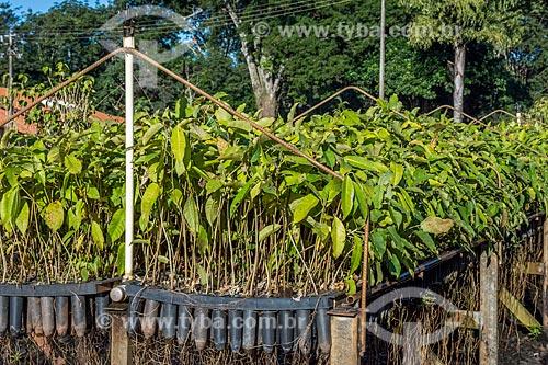 Mudas no viveiro do Refúgio Biológico Bela Vista  - Foz do Iguaçu - Paraná (PR) - Brasil