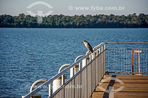 Savacu (Nycticorax nycticorax) pousado às margens do Rio Paraná no porto da Usina Hidrelétrica Itaipu Binacional  - Foz do Iguaçu - Paraná (PR) - Brasil