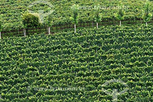Foto aérea de parreiral em formato de plantio chamado espaldeira  - Bento Gonçalves - Rio Grande do Sul (RS) - Brasil