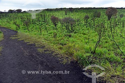 Vista de vegetação típica dos Campos de Cima da Serra no Parque Nacional dos Aparados da Serra durante a trilha do cotovelo  - Cambará do Sul - Rio Grande do Sul (RS) - Brasil